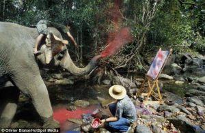 فیلهایی که نقاشی میکشند