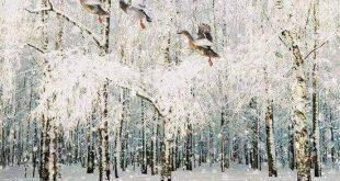 سرمای زمستون